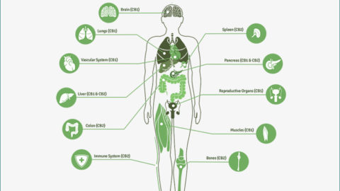 Understanding the Endocannabinoid system & your hormones!